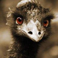 EmuHead
