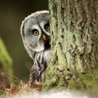 hide-tree