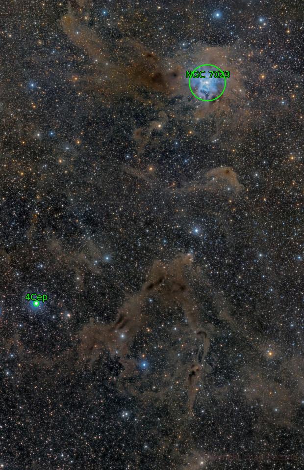 Iris Nebula in a Dusty Field
