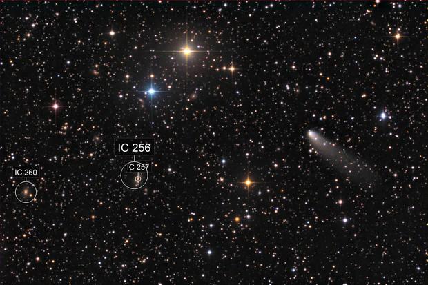 cometa 260P McNaught
