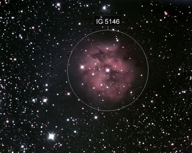 C19 - IC5146