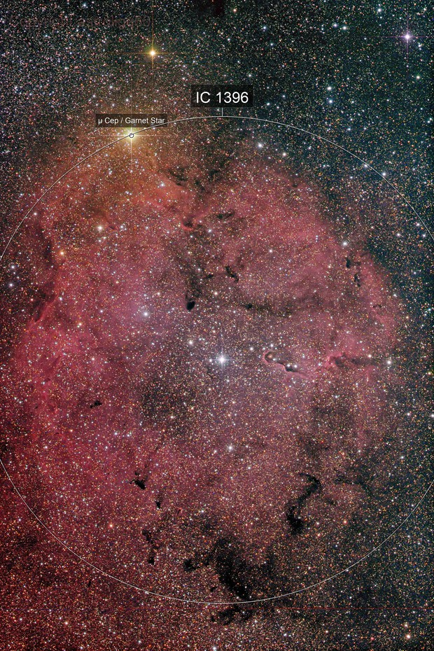 nebulosa IC1396