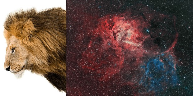 Why the lion nebula? Because...
