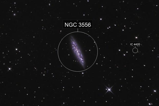 M108 – La Galaxie de la Planche de Surf et M97 – La Nébuleuse du Hibou