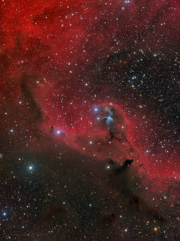Cederblad 51 in the Head of Orion