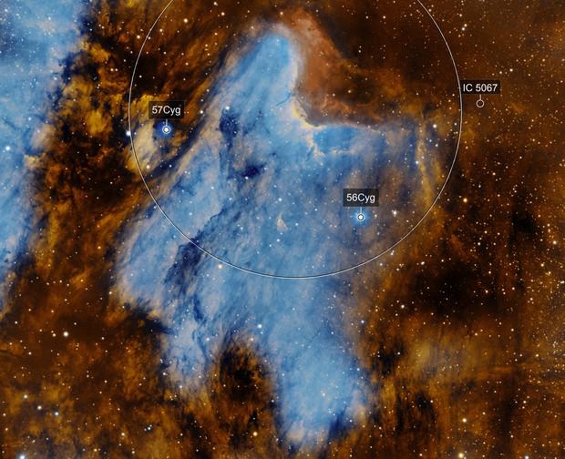Pelican Nebula (SHO)