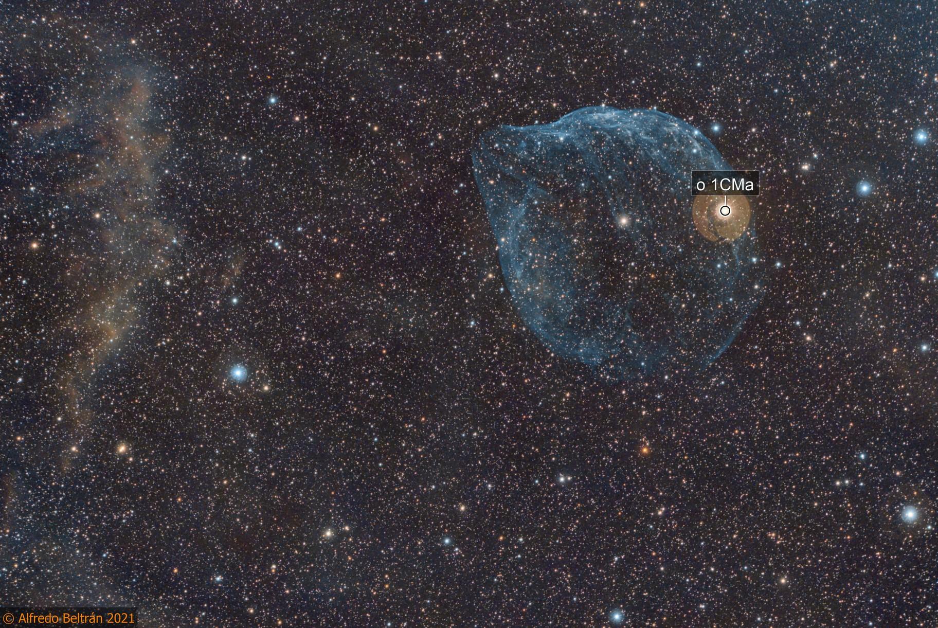 Sh2-308 Nebulosa cabeza de delfín (Dolphin head nebula)