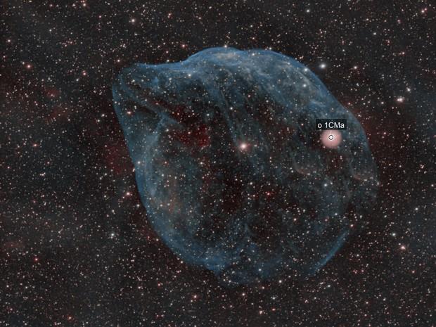 The Dolphin Head Nebula (Sh-2 308)
