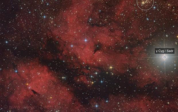 IC1318B/C and LDN889 near Sadr