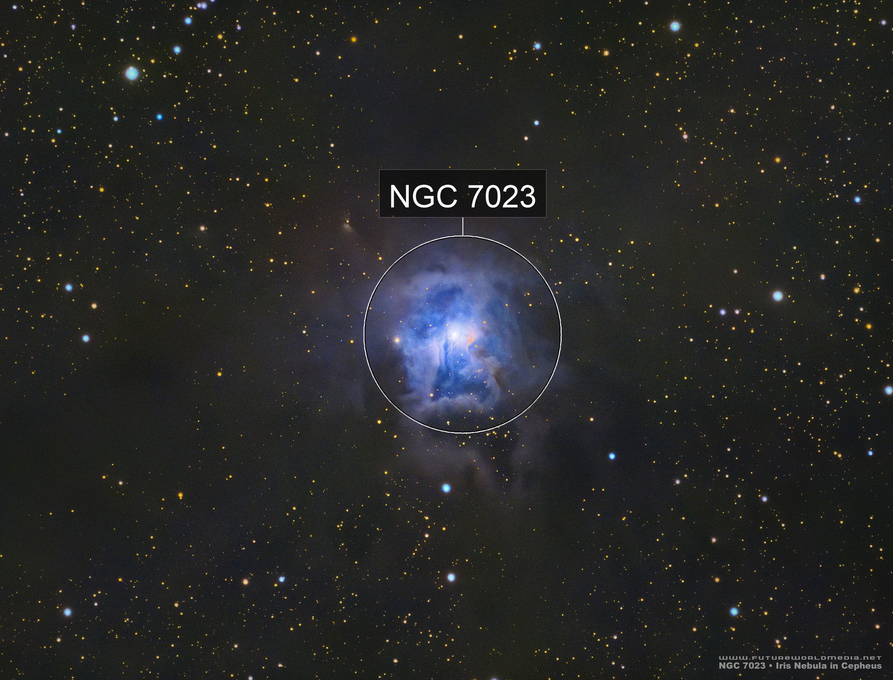 NGC 7023 • Iris Nebula from a White Zone