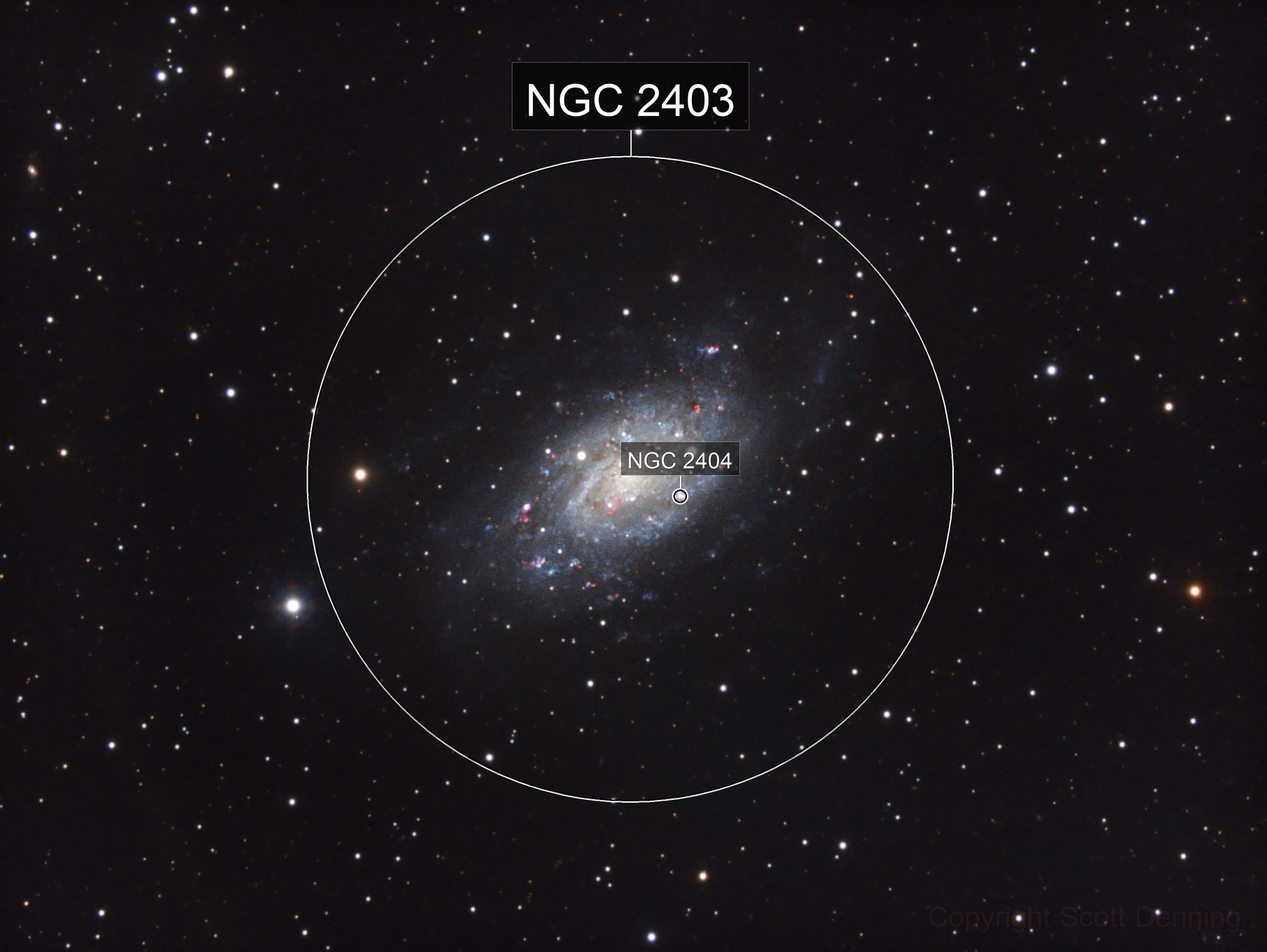 Spiral Galaxy in M81 Group (NGC 2403)