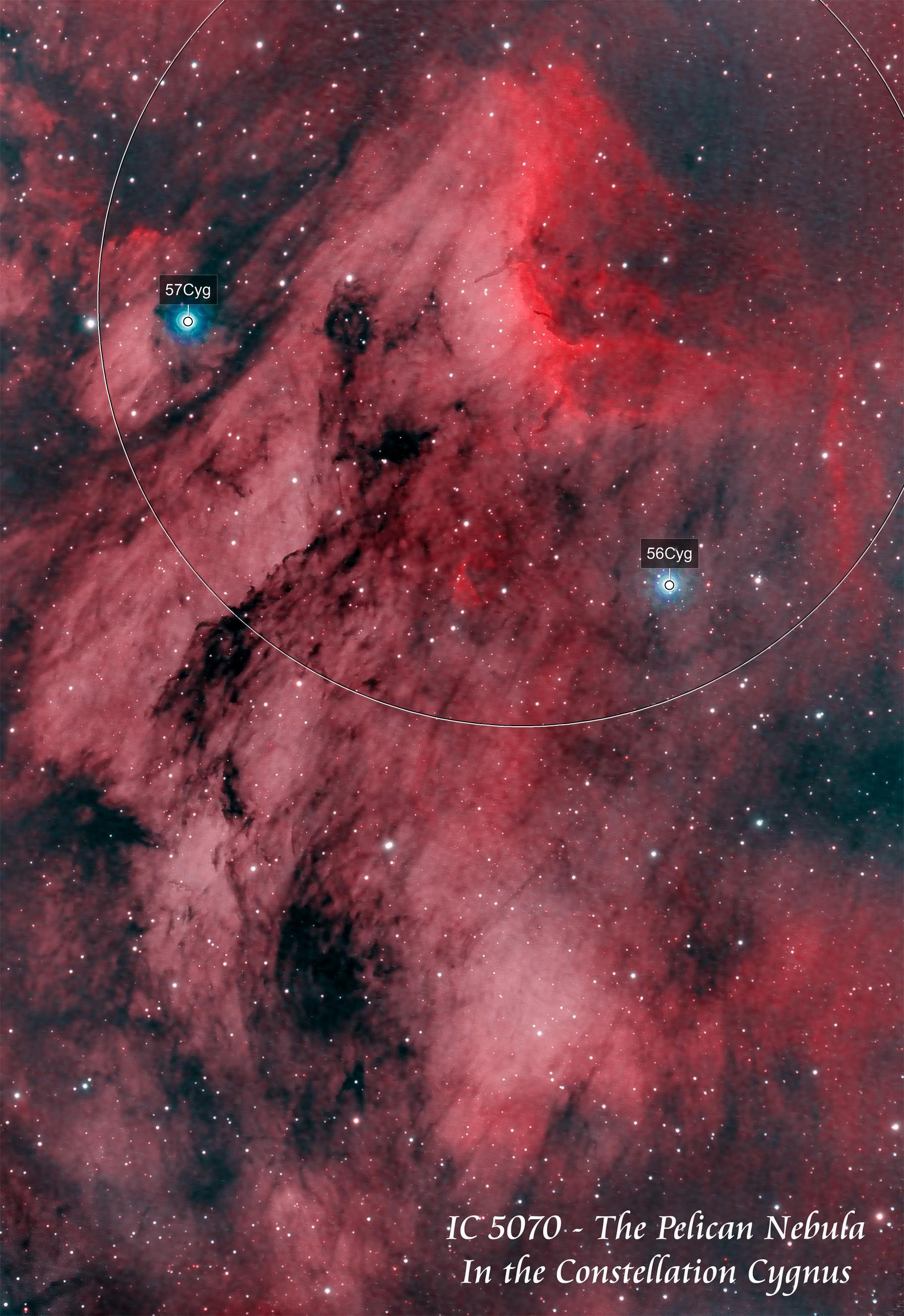 IC 5070  The Pelican Nebula   HOO