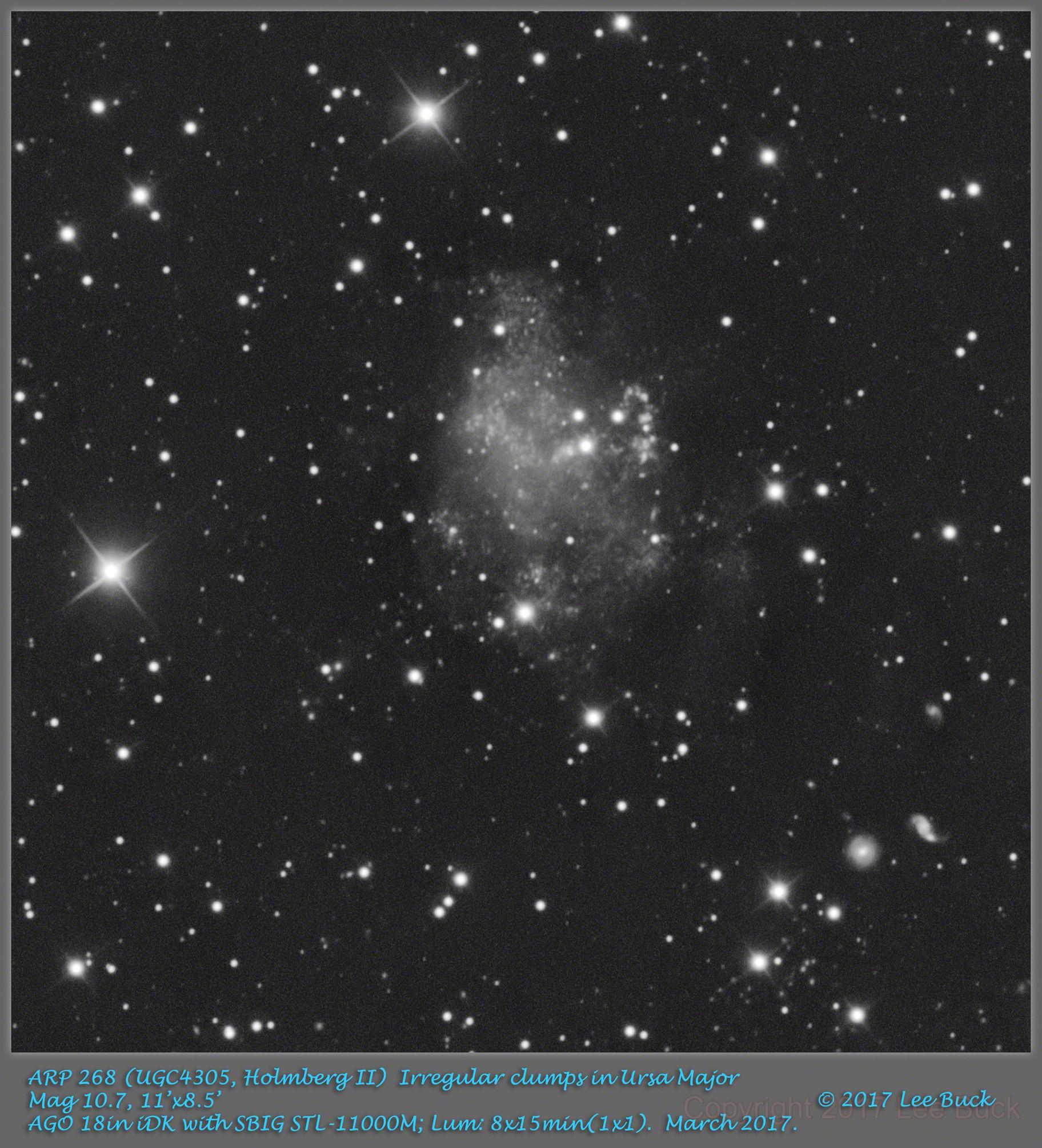 ARP 268 (UGC4305, Holmberg II)  Irregular clumps in Ursa Major