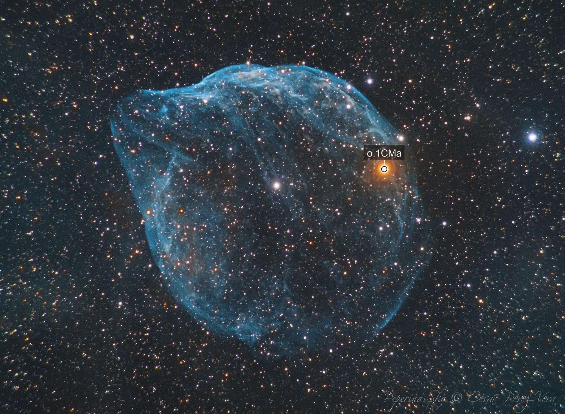 Sh 2-308 - LBN 1052 - Dolphin Head Nebula