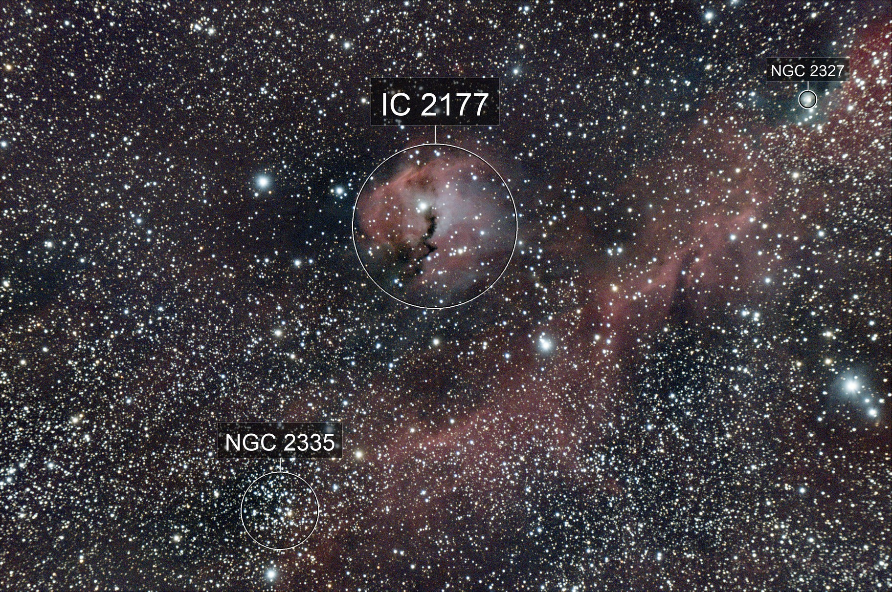 IC2177/The Seagull Nebula