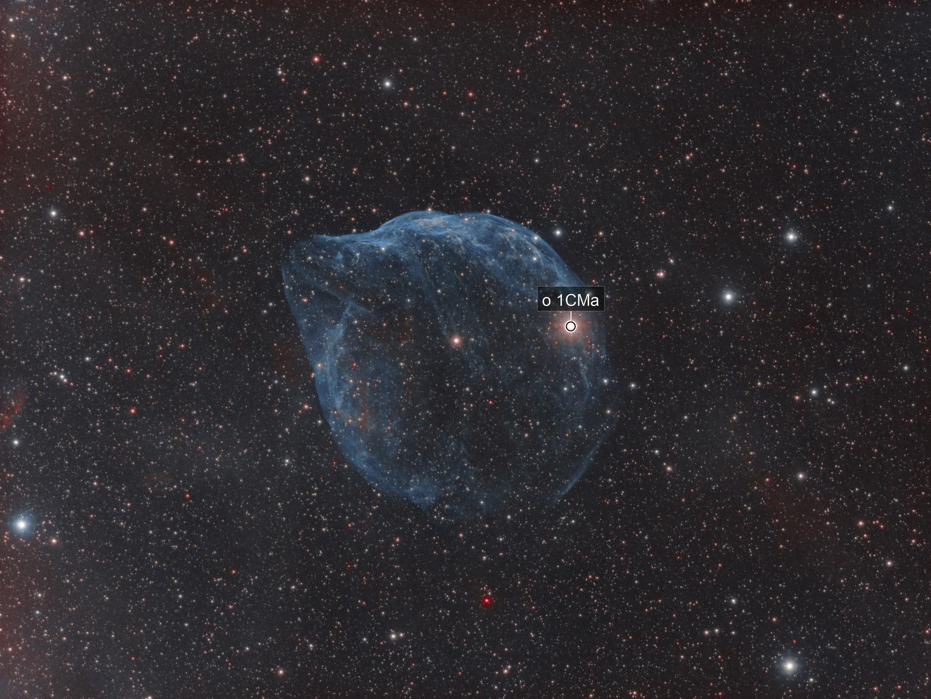 SH2-308: Dolphin Head Nebula