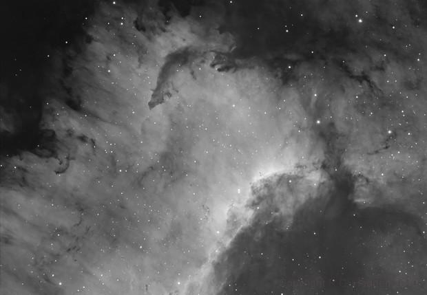 Cygnus Wall and Dark  Nebulae