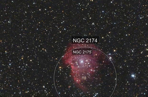 Space Monkey NGC 2174