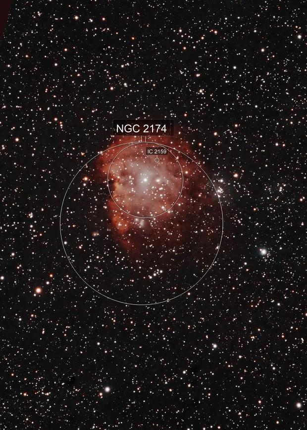 Monkey's head  - NGC 2174