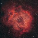 Rosette Nebula,                                Alan Taylor