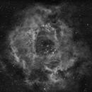 NGC 2237 Rosette Nebula,                                Taddeuccis