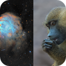 NGC2174 Monkey Head Nebula in SHO-LRGB,                                  equinoxx