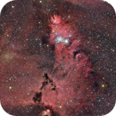 NGC2264 Christmas Tree Cluster, Cone Nebula and Fox Fur Nebula,                                  Andrea Storani