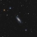 NGC 3198 in Ursa Major,                                Markus Blauensteiner