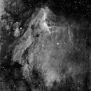 Pelican,                                nebicula
