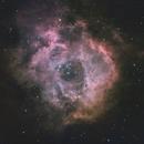 Rosette Nebula NGC2244,                                Thomas Hellwing