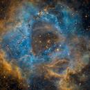 Rosetta,                                Ricky303