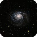 M101,                                Robin Winsor