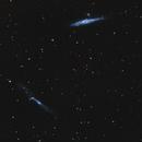 NGC 4631 galaxie de la baleine, NGC 4656 galaxie du levier,                                Gérard Nonnez