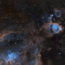 IC 1795 - Fish Head Nebula - Hubble Palette,                                Chris Flory