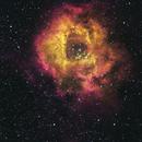 Rosette Nebula,                                Roger Bertuli