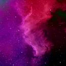 Cygnus Wall,                                Jace Cook