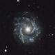 NGC 3631,                                David Newbury