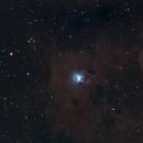The RedCat and the Iris (NGC 7023/Caldwell 4/LBN 487),                                Daniel Erickson