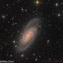 NGC 2903 @DSW,                                Miles Zhou
