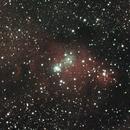 Christmas tree and Cone Nebula,                                Kristof Dabrowski