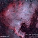 NGC 7000 & IC 5070 - The North America and Pelican Nebulae  HOO,                                Paul Borchardt