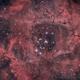 NGC2237, Rosette Nebula [Drizzled x2],                                Vincent Bchm