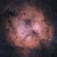 IC 1396 Elephant Trunk Nebula,                                Krishna Vinod