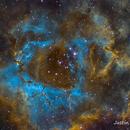Rosette Nebula,                                Justin Daniel