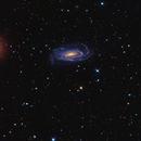Ngc 5033 - The Octopus Galaxy,                                Salvatore Grasso