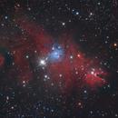 NGC 2264,                                Adriano