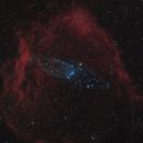 Flying Bat and Squid Nebulae in Cepheus,                                Steve Milne