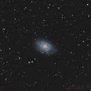 NGC 7793 in Sculptor,                                Leslie Rose