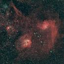 Flaming Star Nebula & The Tadpoles,                                Jared Holloway