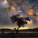 Tree of the Stars,                                Henrique Silva